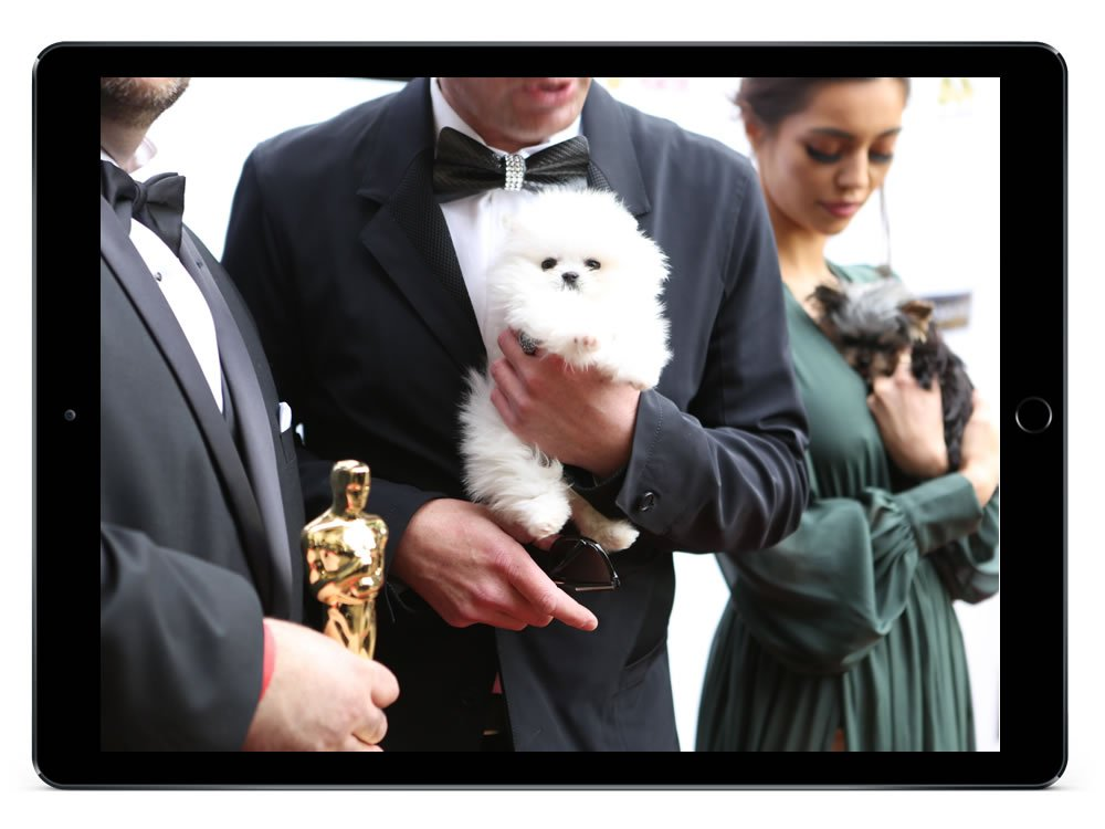 FouFou Puppies Web Design at the Oscars